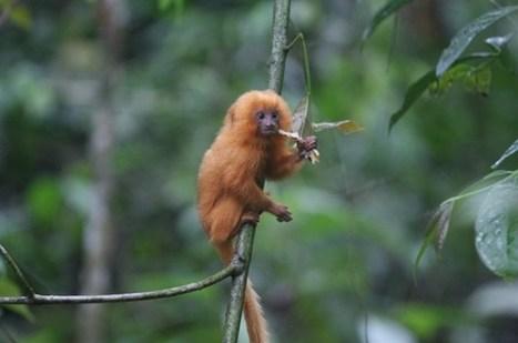 Les espèces disparaissent bien plus vite qu'avant | Réseau Tela Botanica | Scoop.it