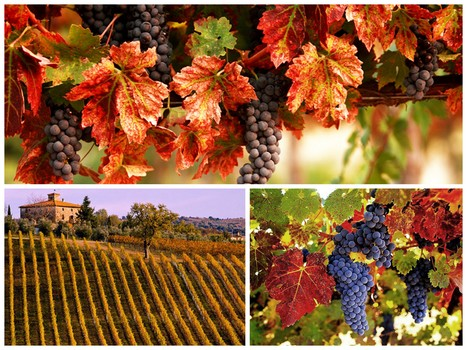 """A """"new"""" wine is coming soon… 