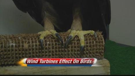 IAATE talks winds turbines and birds | Wind Energy and Wildlife | Scoop.it