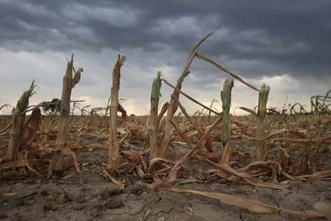Climate change and the next Great Famine | TIME | Africa and Beyond | Scoop.it