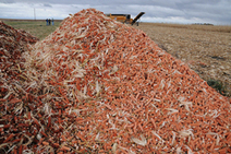 Corn Fiber Approved as Cellulosic Feedstock | Domestic Fuel | biorenewable energy | Scoop.it