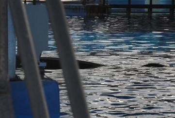 The Truth About 'The Truth About Blackfish' | Animals in captivity - Zoo, circus, marine park, etc.. | Scoop.it
