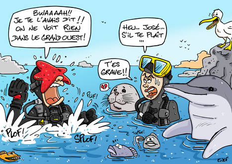 Idée reçue n°2 : Il n'y a rien à voir sous l'eau (2/10)   Moi, je plonge à l'Ouest !   Scoop.it