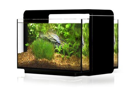 6 6 gallon desktop fish tank with led light in sr aquaristik scoop it