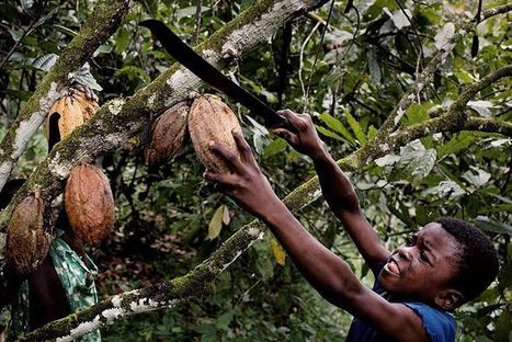 Chocolate's Child-Labor Problem Keeps Getting Worse | AP HUMAN GEOGRAPHY DIGITAL  STUDY: MIKE BUSARELLO | Scoop.it