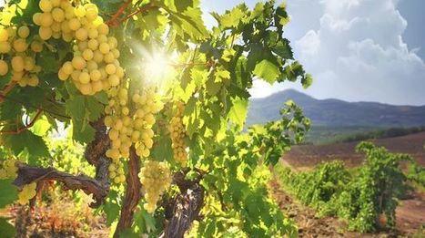 Qu'est-ce que le vin naturel? | Vins nature, Vin de plaisir | Scoop.it