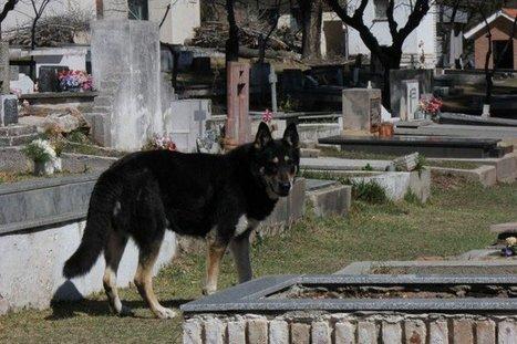 Lorsque son maître est mort, ce chien a fait preuve d'une grande loyauté | CaniCatNews-actualité | Scoop.it