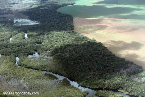 Can saving forests help feed the world?   Biodiversity IS Life  – #Conservation #Ecosystems #Wildlife #Rivers #Forests #Environment   Scoop.it