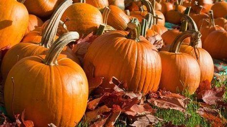Chef Ingrid Hoffmann on the health benefits of pumpkin seeds   Troy West's Radio Show Prep   Scoop.it