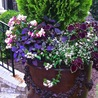 Container Garden Cornucopia