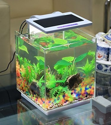 betta fish' in aquariums | scoop.it