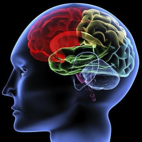 Nuestro cerebro un músculo con curiosidades » Innovpymes Business School | Sociedad 3.0 | Scoop.it