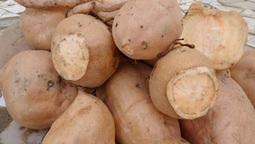 SENEGAL: La biofortification peut-elle vaincre la malnutrition ? | La Spiruline : une algue très douée... pour 1 kg de protéines | Scoop.it