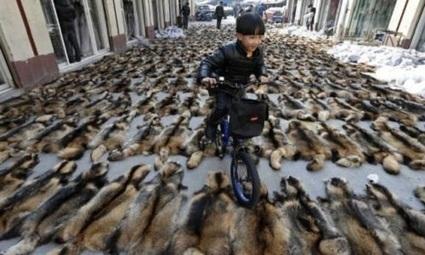 Pétition : Go Sport, non à la fourrure de racoon, coyotes et lapins!   Nature Animals humankind   Scoop.it