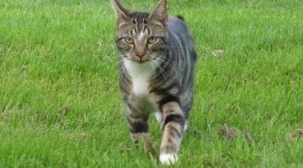 A Zurich, avoir plus d'un chat chez soi pourrait être interdit | CaniCatNews-actualité | Scoop.it