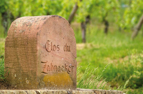 How Alsace co-operatives saved growers... | Vitabella Wine Daily Gossip | Scoop.it