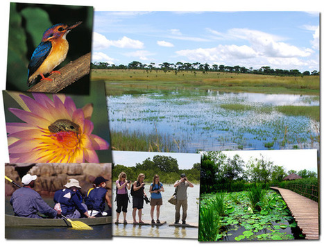 Tourism and wetland conservation: not all positive | Lorton Consulting | Conservation, Ecology, Environment and Green News | Scoop.it