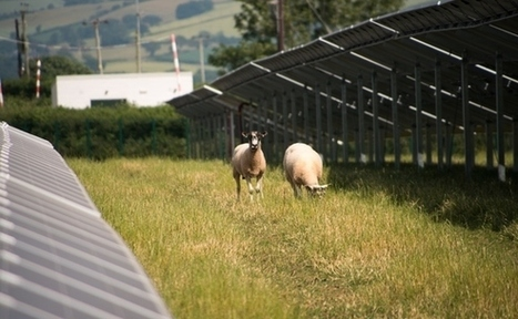 Anesco partners with RSPB to boost solar farm birds and bees | Wind Energy and Wildlife | Scoop.it
