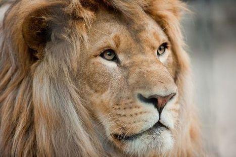 Wildlife Sanctuaries in Sri Lanka, Serene Tourist Attractions   Best Blog   Scoop.it