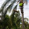 CJ S Tree Service