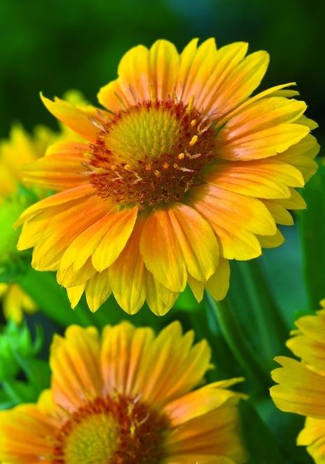 Benefits of School Gardening | School Gardening Resources | Scoop.it