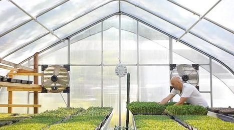 Good Water Farms: Growing a Microgreens Culture - Organic Connections | Searching for Safe Foods | Scoop.it