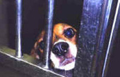 How You Can Help World Laboratory Animal Liberation Week | Nature Animals humankind | Scoop.it