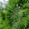 Match Fixing & Corruption in Sport - The Spider's Web