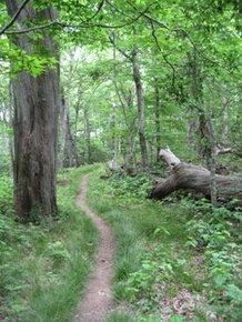 """Time in Nature is the real """"Smart Drug"""" Children Need 