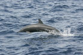 To Study Backward-Finned Dolphin, Researcher Sources Crowds for Cash | #SciFund | Scoop.it