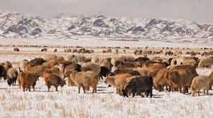 Agriculture: Steps to sustainable livestock | A Better Food System | Scoop.it