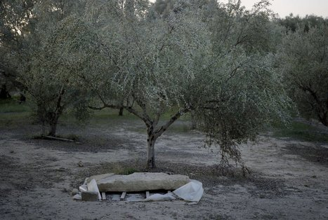 This 3,500-Year-Old Greek Tomb Upended What We Thought We Knew About the Roots of Western Civilization | Education for Sustainable Development | Scoop.it