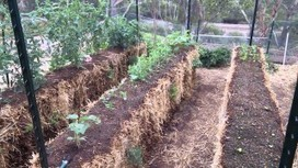 My straw bale garden - a video tour of a California garden, and its a doozy!   Sustainability: Permaculture, Organic Gardening & Farming, Homesteading, Tools & Implements   Scoop.it