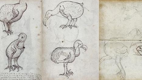 El dodo no era un pájaro bobo | Pangea |...