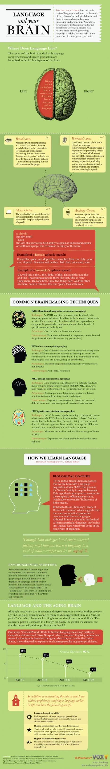 Language and Your Brain - INFOGRAPHIC | UDL & ICT in education | Scoop.it