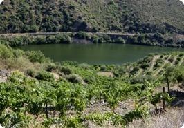 Arrochella.com - A legacy for new generation | Portuguese Wine Producers | Scoop.it