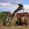 global rice growing