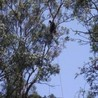 Latest Tree Lopping Techniques Used in Brisbane