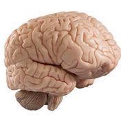 Un cerebro más 'conectado' dio su genialidad a Einstein - La Nación Costa Rica   historian: science and earth   Scoop.it