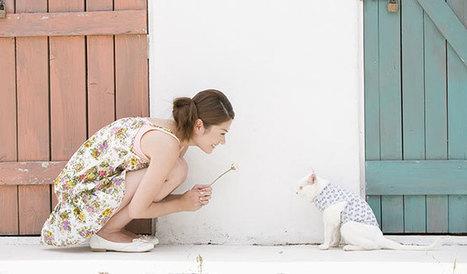 5 choses que font tous les propriétaires de chats | CaniCatNews-actualité | Scoop.it