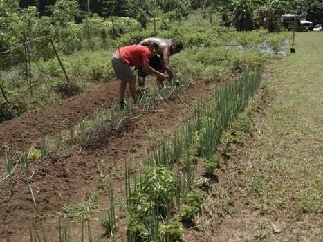 L'agriculture biologique ou organique : parlons-en ! | Alternativas - Tecnologías - Reflexion - Opiniones - Economia | Scoop.it