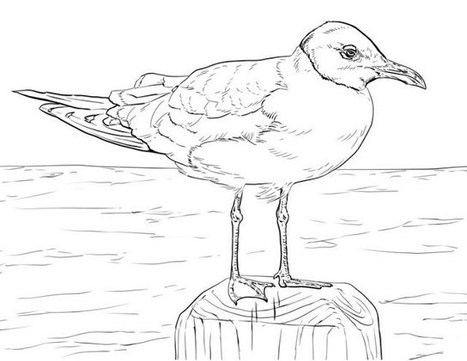 This is a photo of Free Printable Bird Coloring Pages throughout mythical bird