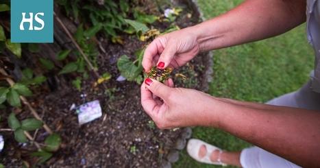 Annabelle kukkia porno elokuvaa