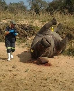 Rhino poacher's sentence reduced - News24 | Kruger & African Wildlife | Scoop.it