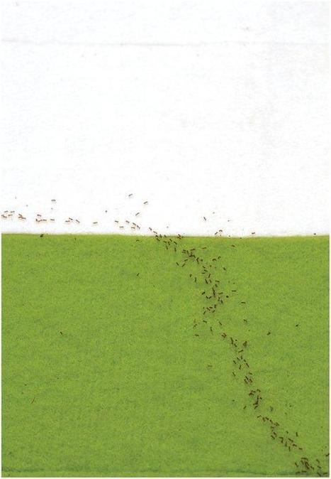 Ants Use 'math' to Find Fastest Routes | All About Ants | Scoop.it