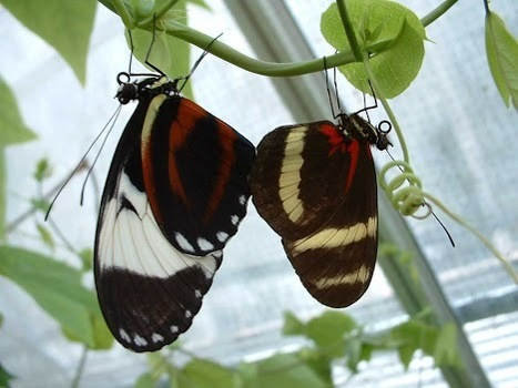 Evolution of new species requires only a few genetic changes   Amazing Science   Scoop.it