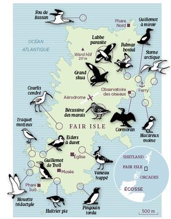 Ecosse : Shetland, le sanctuaire des oiseaux | Biodiversité | Scoop.it