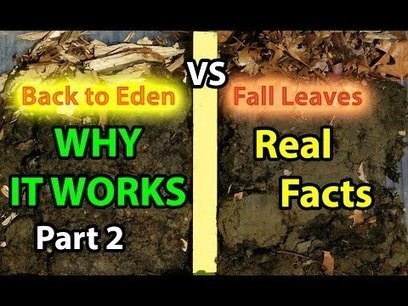 Back to Eden Organic Gardening 101 Method with Wood Chips VS Leaves Composting Garden Soil #2 | Gardening HQ | Gardening | Scoop.it