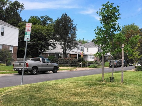 Developer's $5,000 will pay for new trees in Towson neighborhood | Suburban Land Trusts | Scoop.it