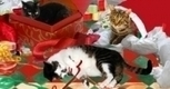 Why Santa Claus Doesn't Have A Cat   Christmas Cat Ornaments and Cards   Scoop.it